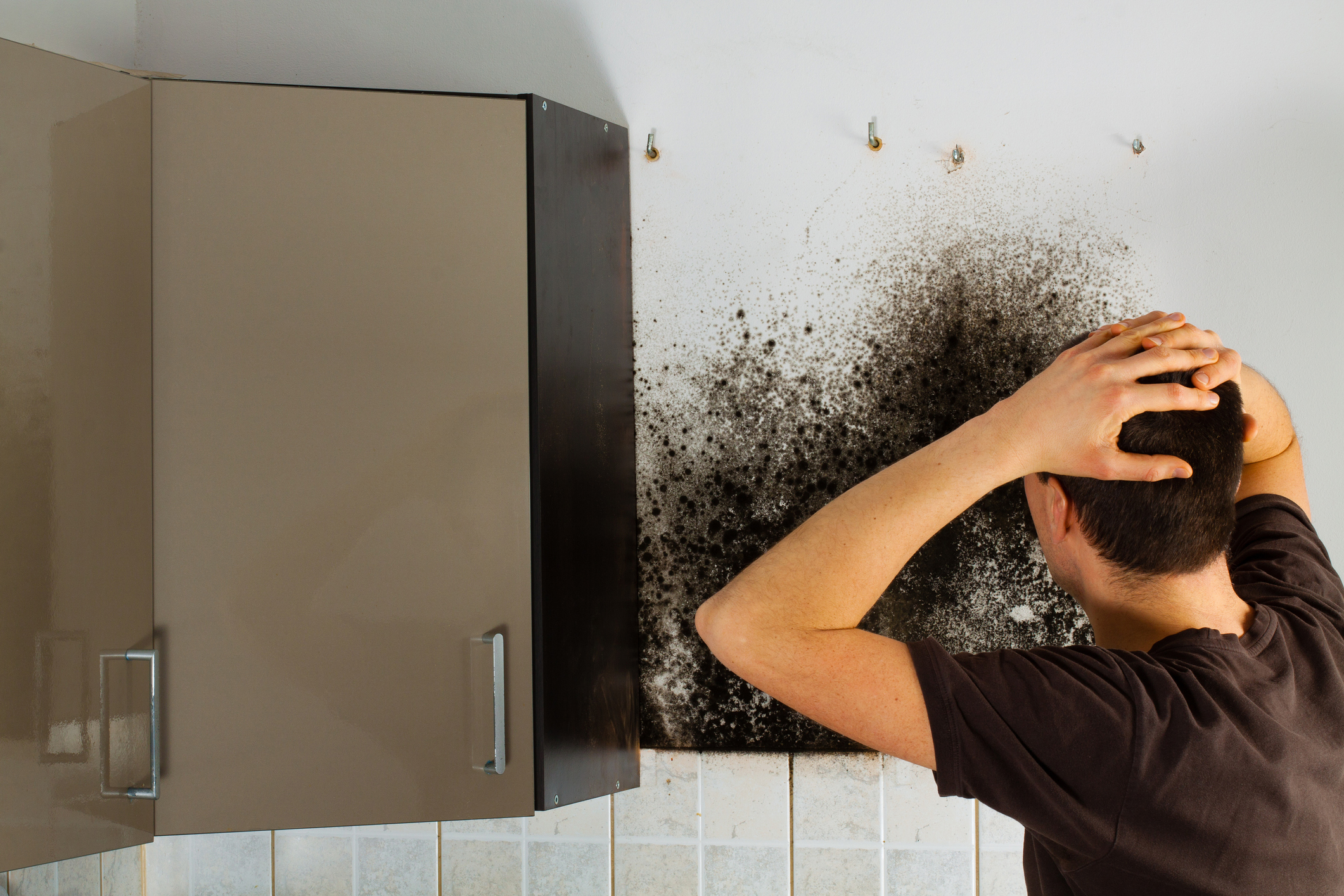 Man shocked to mold in kitchen cabinet.